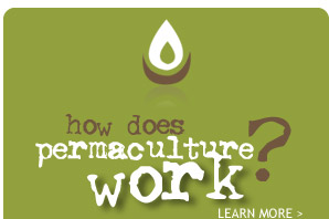 how does permaculture work?
